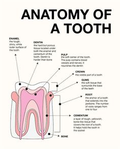 where to buy dental anatomy manual
